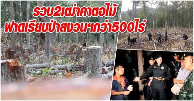 บุกรวบ2เฒ่าคาตอไม้ ทั้งกานทั้งตัด ฟาดเรียบป่าสงวนฯกว่า500ไร่