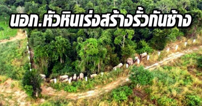 นอภ.หัวหินเร่งสร้างรั้วกันช้าง ลดปัญหาขัดแย้งคนกับช้างป่า