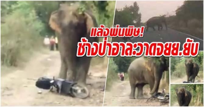 บ้านเมือง - แล้งพ่นพิษ! ช้างป่าอาละวาดจยย.ยับ! (คลิป)