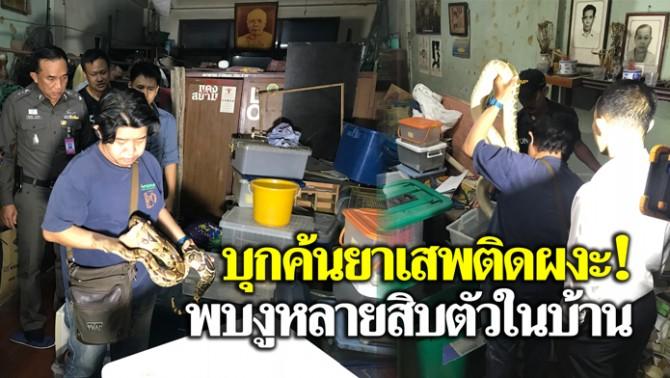 บุกค้นบ้านเป้าหมายยาเสพติดผงะพบงูหลายสิบตัวในบ้าน